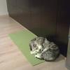 We like kitchen mat