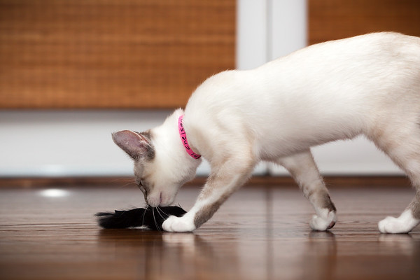 She has really focused her energy on to this black mouse