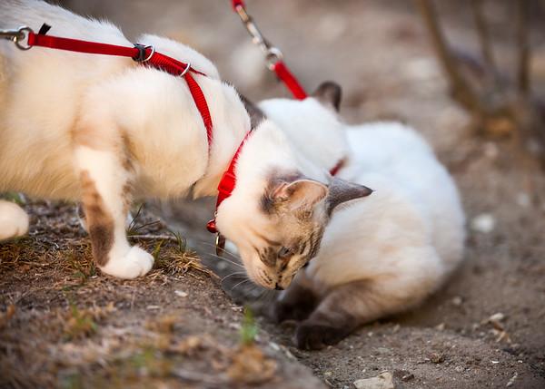Mochi checks out Moka's territory
