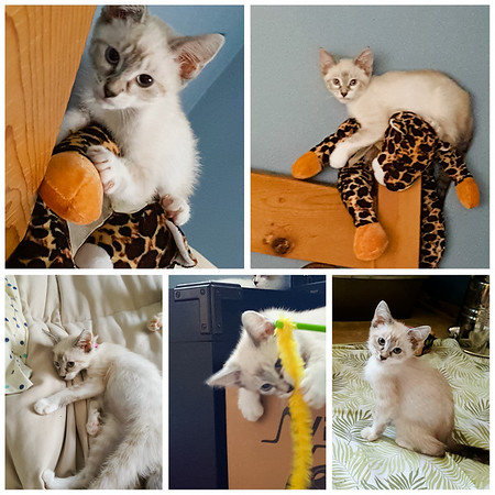 Mochi...then known as Chelsea (Photos and Collage by Christine Lugo)