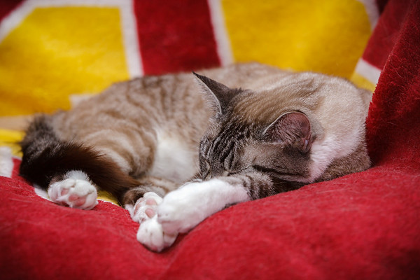 We're ahead of the curve for #Caturday.  It's never too early to be lazy!