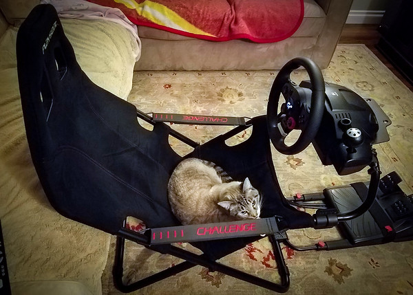 I challenge my hooman to set a record lap time...I need more seat time on his lap!