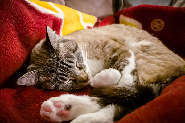 Snuggling with #CatMom...Zzzzzzzzzzzzzzz