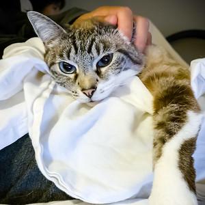 Pinned #CatDad again