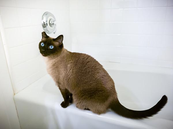 Bathroom duty