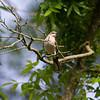Mockingbird from Below