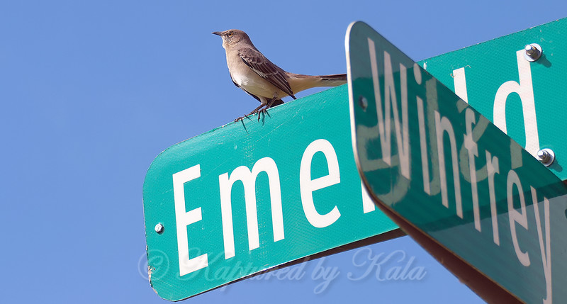 Street Sign Singer