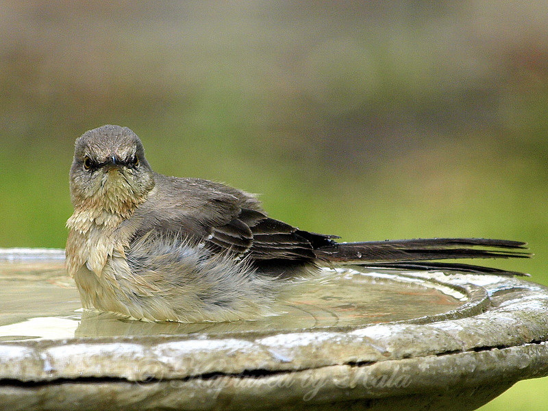 Take Enough Photos of Birds in the Bird Bath and Sooner or Later Every One of Them Gives You This Look