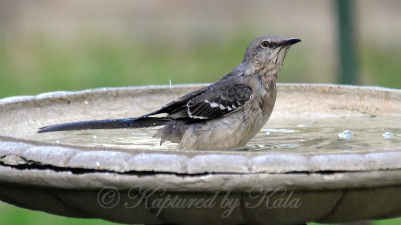 Mid-bath Hawk Check