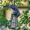 Mockingbird Going For It