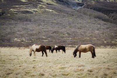 2018 Iceland-0086
