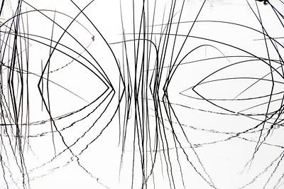 Nature Sketches III