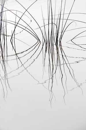 Nature Sketches VI