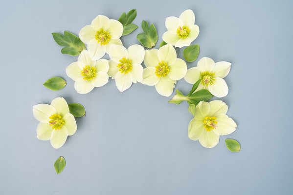 Hellebore Floral Flat lay (3)