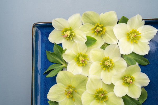 Hellebore Floral Flat lay (1)