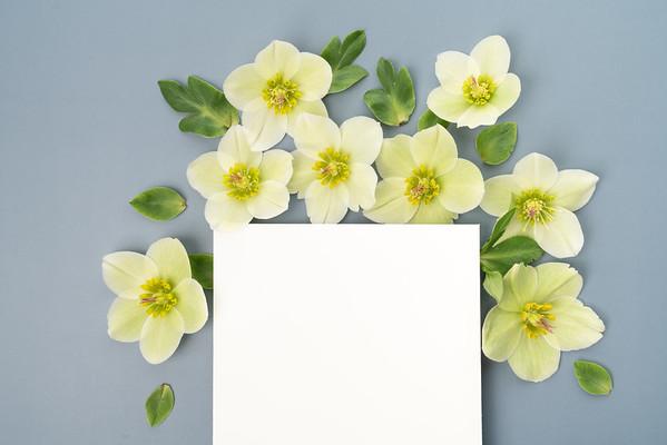 Hellebore Floral Flat lay (4)