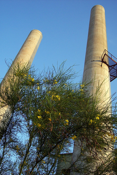 Yellow bush and stacks