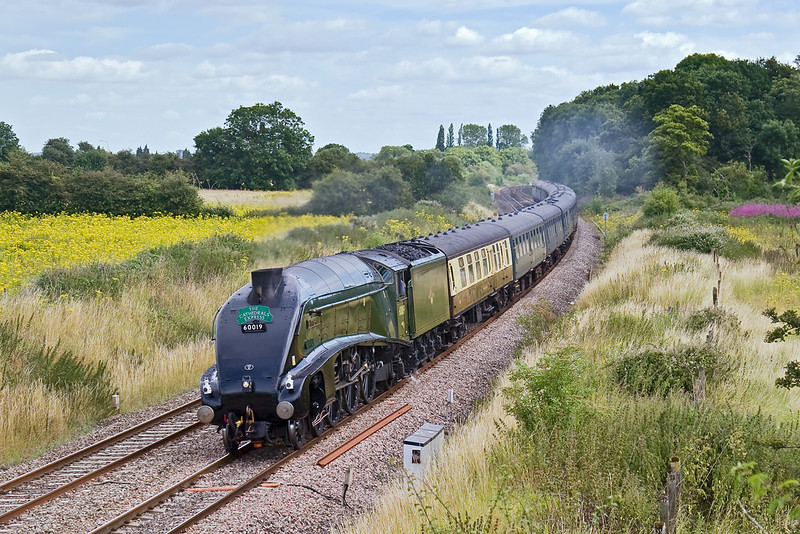 16th Jul 08:  60019 'Bittern' on a Cathex to Bristol going well as it passes Frouds Lane in Woolhampton on the Berks & Hants line
