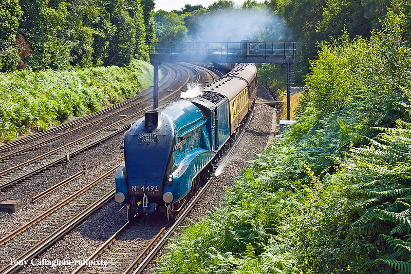 2nd Aug 11:   Storming round the curve through Pirbright is LNER Pacific 4492 'Dominion of New Zealand' working the Dorset Coast Express from Victoria to Weymouth