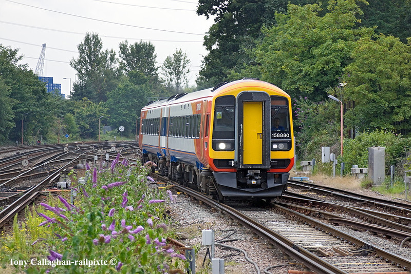 21st Jul 11:  Passing Lobelia bushes 158880 arrives on time at Southampton Central with 2R50 the 13.50 from Salisbury to Romsey