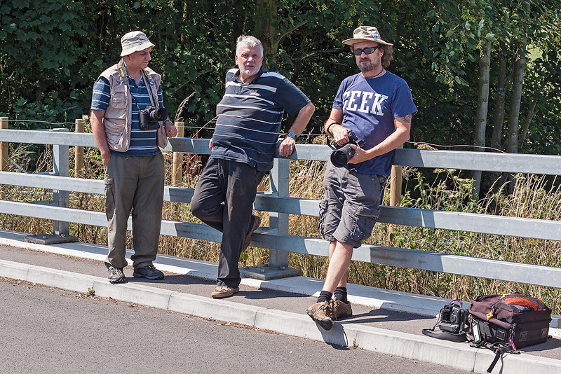 1st Aug 13:  Three handsome fotters in the peak of condition at Lower Basildon.  Mmm perhaps not.