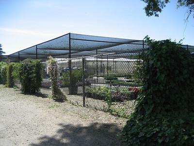 MJC Plant Nursery