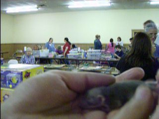 Rub a baby rat in just the right way and she will calm down and begin to enjoy you and bond with you. If you're viewing this in the keywords gallery, click below to go to some pages with embedded youtube videos of baby rats wrestling with each other and interacting with humans.