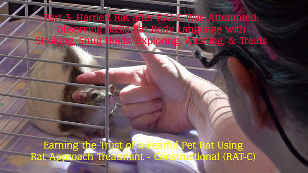 In this video, Gwen reverts back to trying some other standard techniques to help Harriett become less frightened. These are shown here for people learning to see how such techniques may not be helpful to a frightened rat.