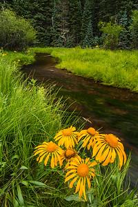East Fork Little Colorado River, near East Baldy Trail