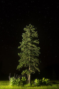 Nighttime near East Baldy Trail, Mount Baldy