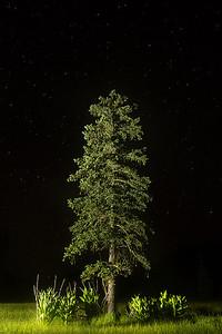 Nighttime near East Baldy Trail, Mount Baldy