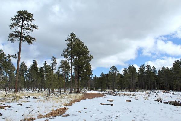 Winter scene at the General Crook Trailhead (2018)