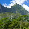 Moorea Island (French Polynesia Islands)
