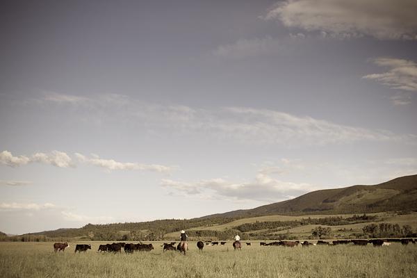 Cowboys in Landscape (Montana)