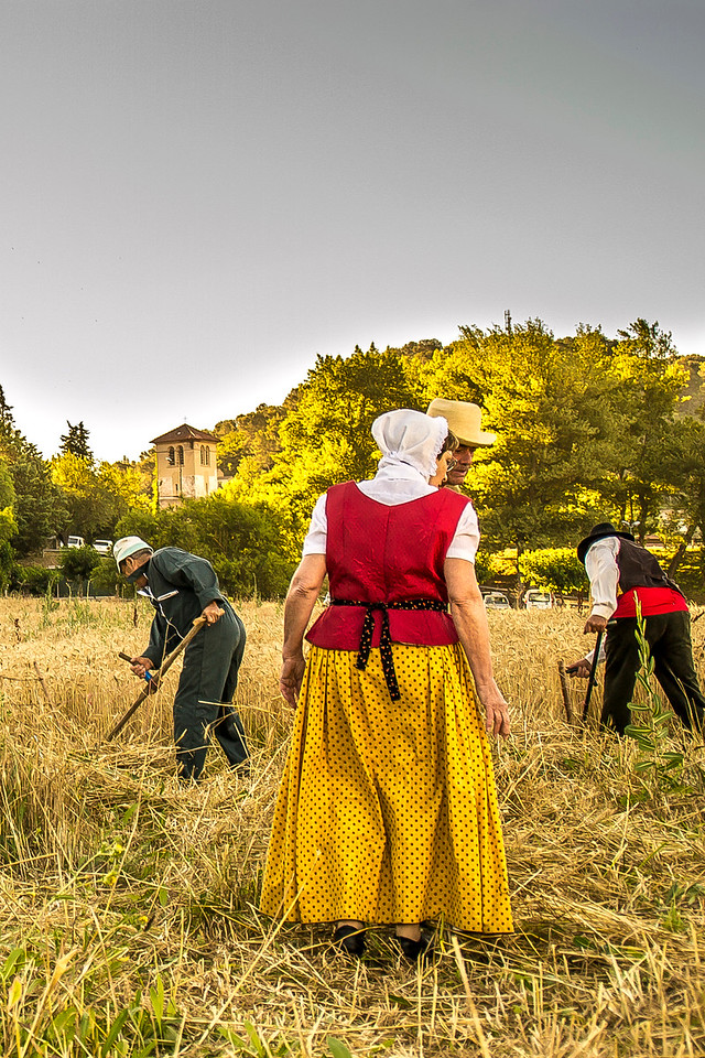 Provençaux à la moisson
