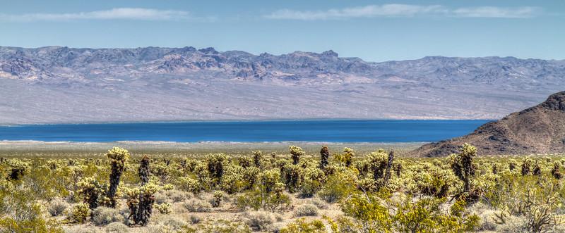041 Cholla cactus, Lake Mojave on the Colorado River south of Cottonwood Cove.