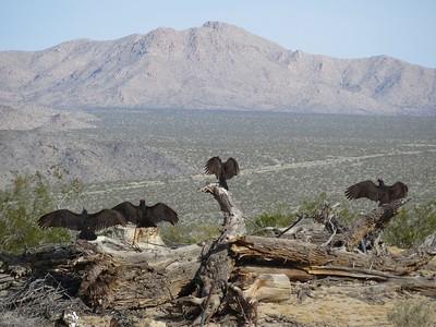 2016 Wilderness Volunteers Mojave National Preserve Service Trip