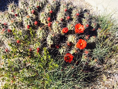 2016 Mojave National Preserve