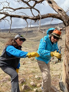 Elaine and Kathleen removing wire from trees