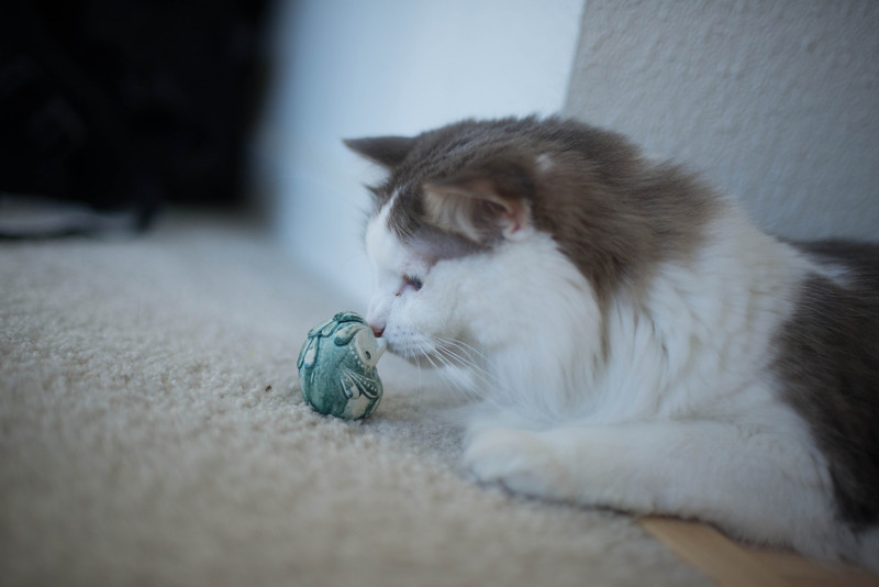Mokono_Sloke_And_The_Kitty-8