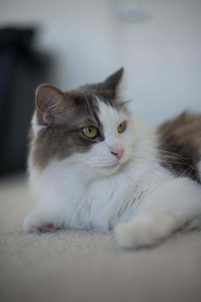 Mokono_Sloke_And_The_Kitty-2