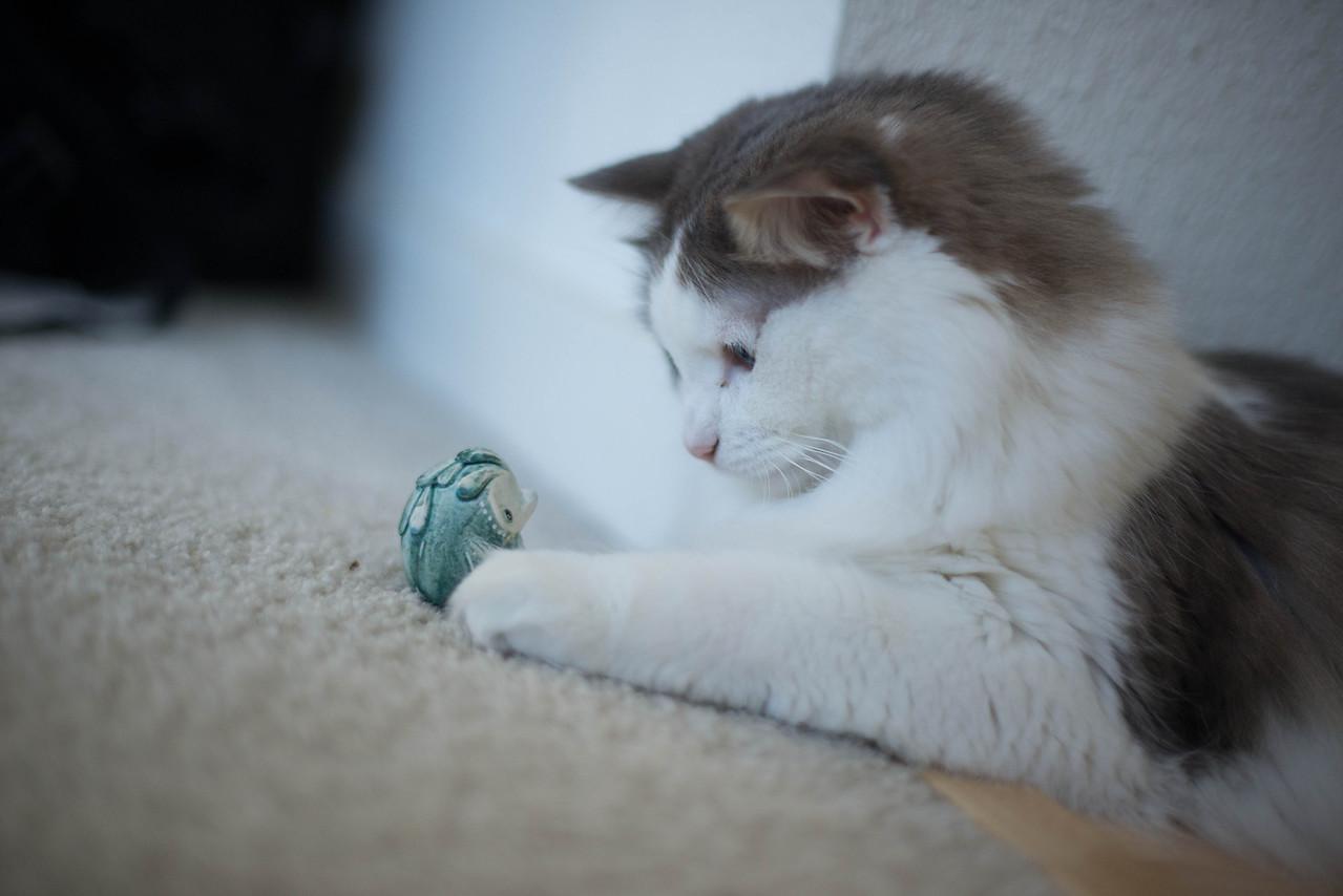 Mokono_Sloke_And_The_Kitty-11