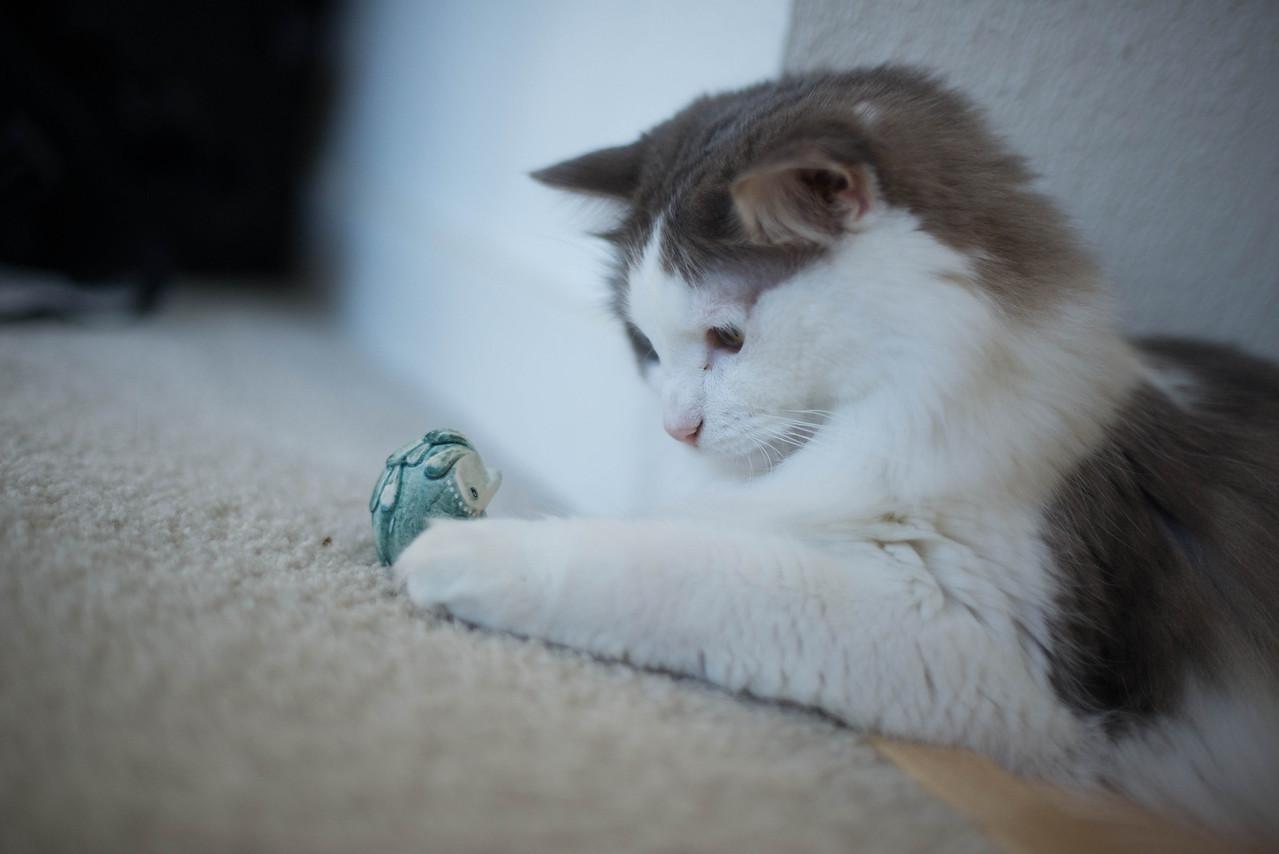 Mokono_Sloke_And_The_Kitty-12
