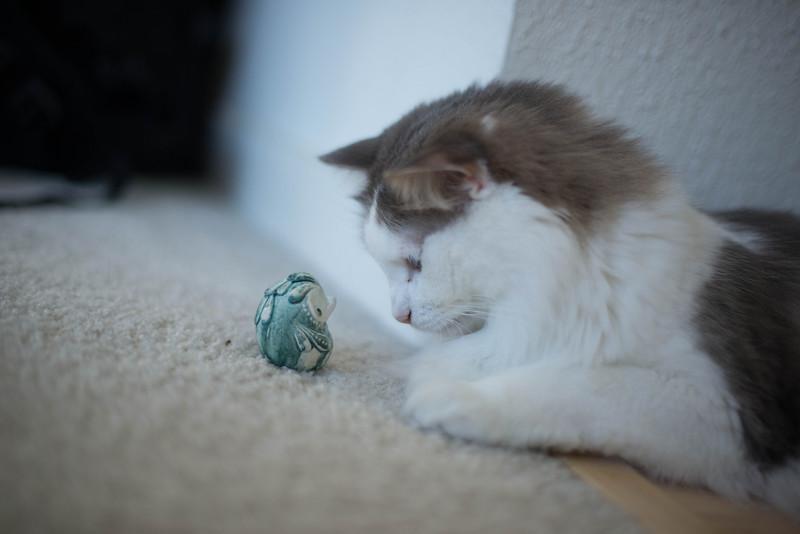 Mokono_Sloke_And_The_Kitty-10