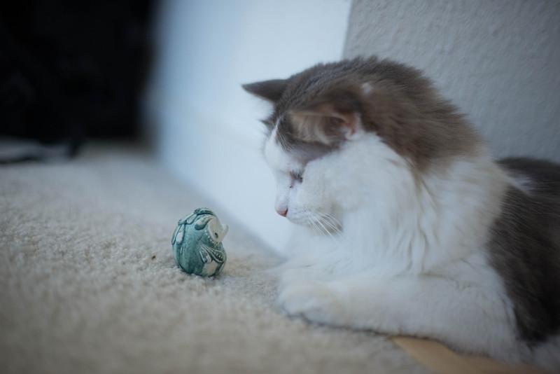 Mokono_Sloke_And_The_Kitty-7