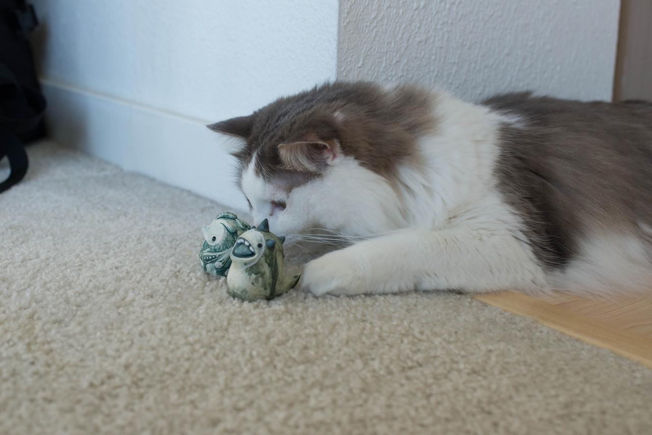 Mokono_Sloke_And_The_Kitty-14