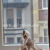 Amanda Scott 0088