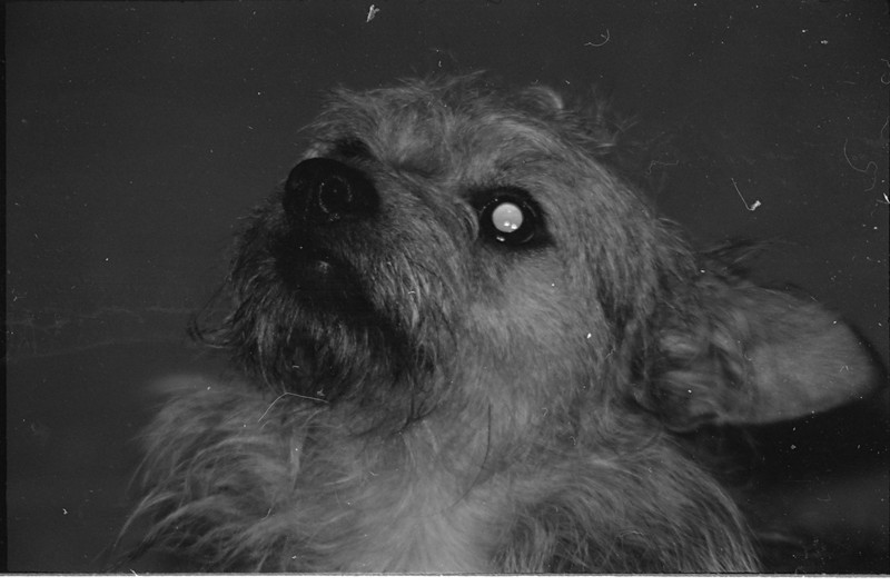 Scamper, our dog, 1974