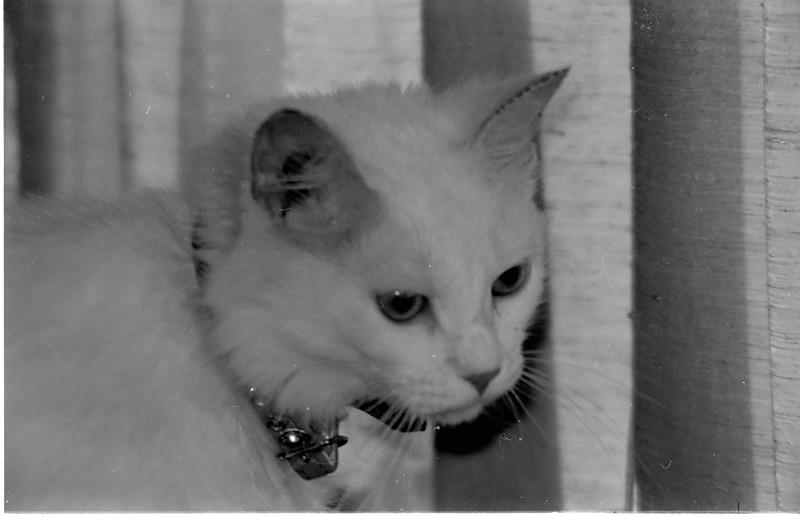 Jenny, Penni's cat, 1974