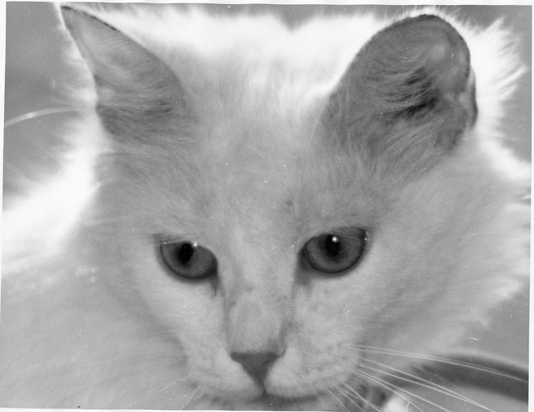 Penni's cat, Jenny, 1974
